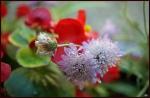 my garden 96 by Alfa30