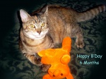 Boo Kitty B Day by sed