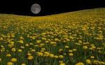 Dandelion Moon by Mitsubishiman