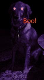 Devil Dog by etype2