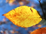 Leaf Peeping by FredNunes