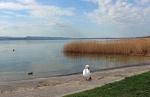 Lake 53 by Alfa30
