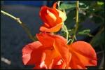 My garden 100 by Alfa30