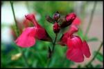 My garden 107 by Alfa30
